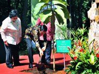 Jokowi Minta  KLH Koreksi Kelola Hutan