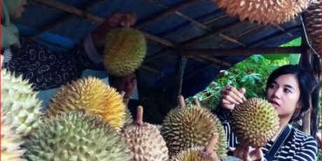 Trik Makan Durian Aman untuk Cegah Gula Darah Meningkat Drastis