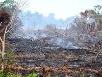 Siaga Darurat Kebakaran Hutan Dan Lahan