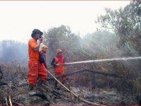 Kebakaran Hutan Dan Lahan Terus Berlangsung Di Kalimantan Barat