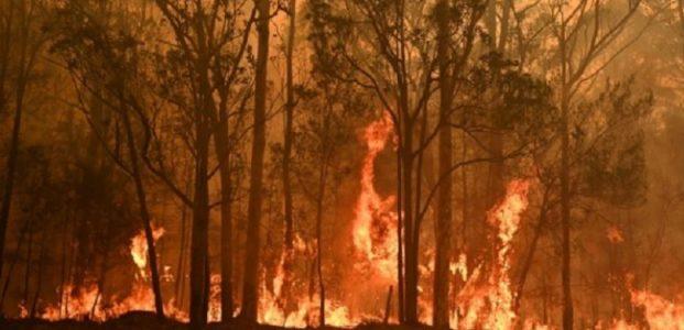 Kebakaran Hutan Di Australia Terparah Sepanjang Sejarah