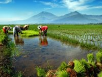 Lebih Murah dan Subur, Petani Diimbau Gunakan Pupuk Kompos